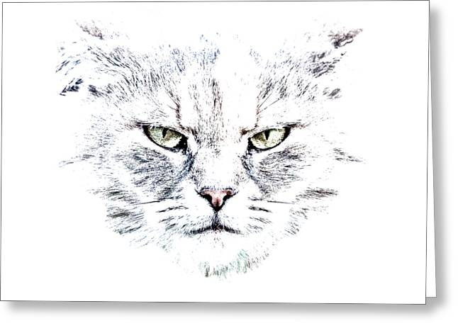 Disturbed Cat Greeting Card by Everet Regal