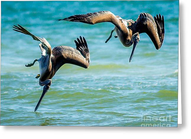 Hunting Bird Greeting Cards - Dive Greeting Card by David Omohundro