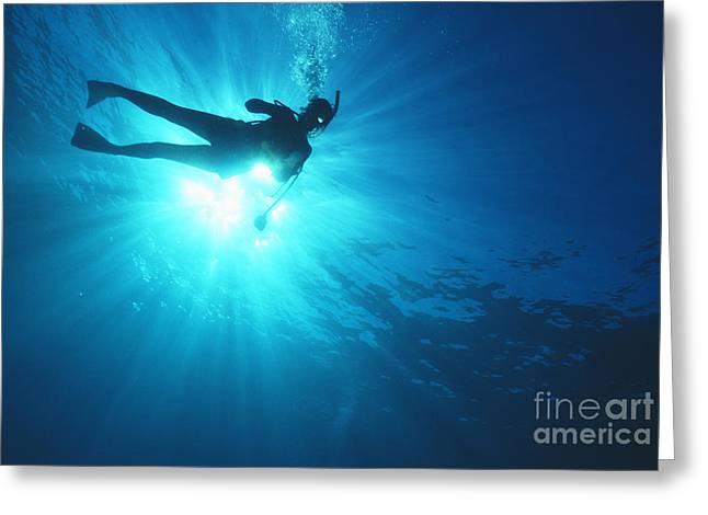 Ocean Art Photos Greeting Cards - Diver On Mahi Wreck Greeting Card by Bob Abraham - Printscapes