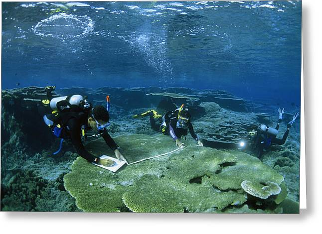 Scuba Diving Greeting Cards - Divers Mapping The Area Find Fragile Greeting Card by Paul Nicklen