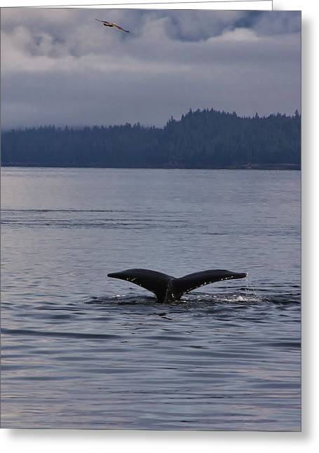 Ocean Mammals Greeting Cards - Diving Humpback Whale Greeting Card by Stacie Gary