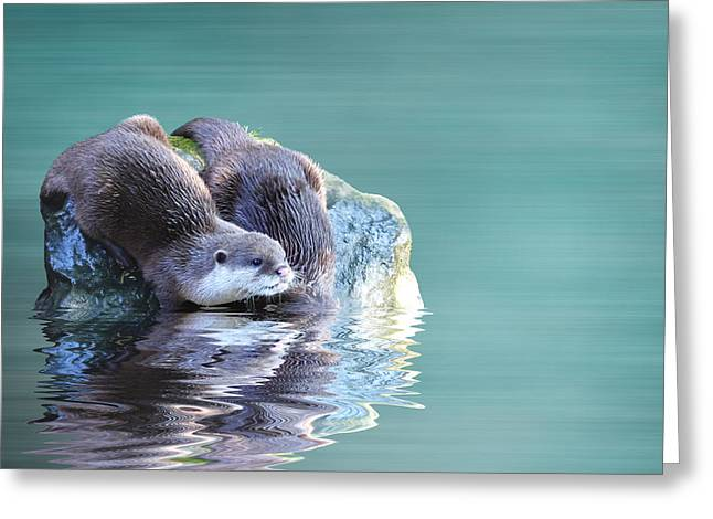 Otter Greeting Cards - Diving in Greeting Card by Sharon Lisa Clarke