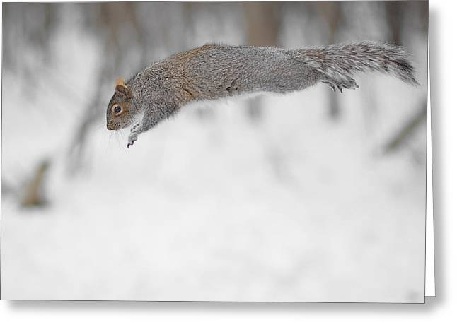 Diving Squirrel Greeting Card by Asbed Iskedjian