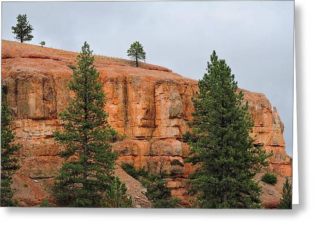 Dixie National Forest Greeting Card by Connor Beekman