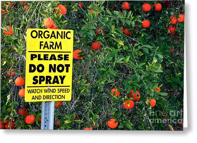 Tangerines Greeting Cards - Do Not Spray Sign Greeting Card by Inga Spence