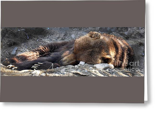 Berry Greeting Cards - Do Not Wake the Beast Greeting Card by Diane E Berry