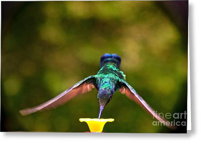 Hovering Greeting Cards - Do Not Watch Me While I Am Eating Greeting Card by Al Bourassa