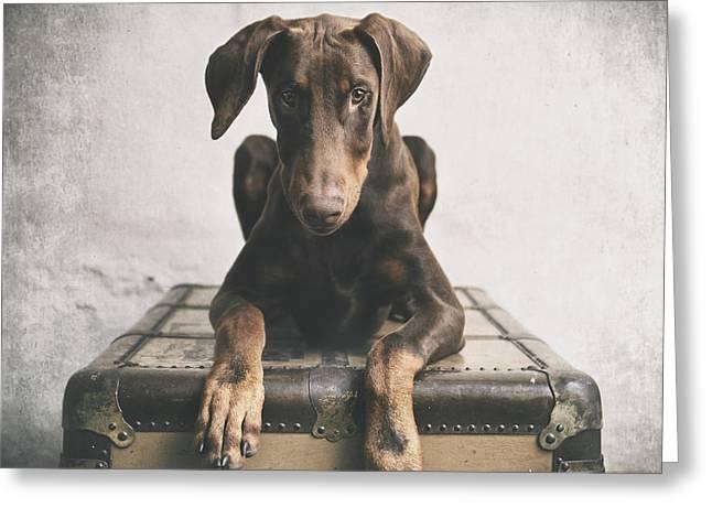 Doberman Pinscher Puppy Greeting Cards - Doberman Pinscher Puppy 3 Greeting Card by Wolf Shadow  Photography