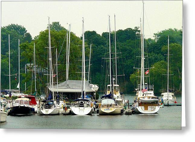 Docked Sailboats Greeting Cards - Docked Sailboats Greeting Card by Geraldine Clark
