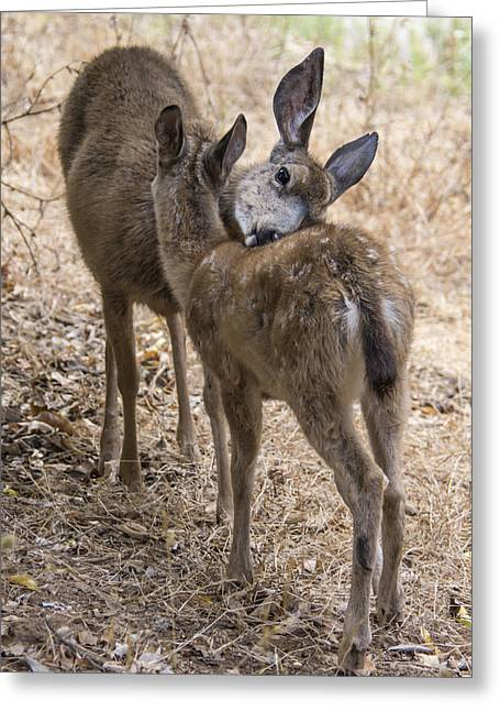 Doe And Fawn Greeting Card by Bruce Frye