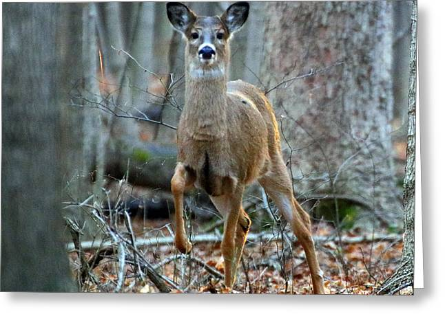 Doe On The Move Greeting Card by Steve Gass