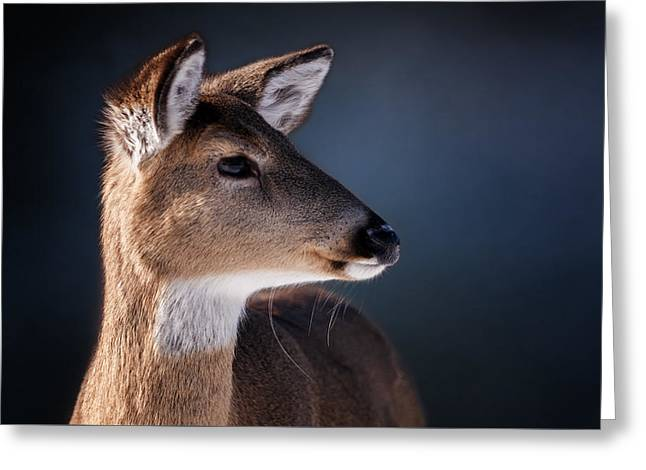 White-tail Deer Greeting Cards - Doe Portrait - White Tailed Deer Greeting Card by Sharon Norman