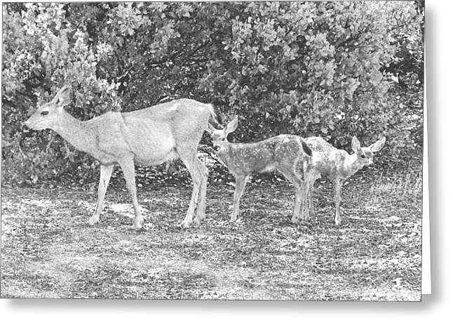Doe With Twins Pencil Rendering Greeting Card by Frank Wilson