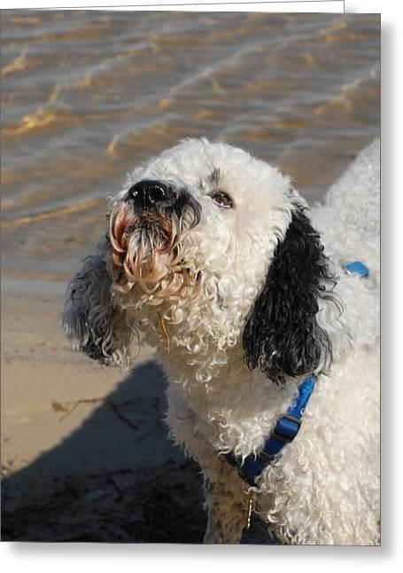 Litter Mates Greeting Cards - Dog 195 Greeting Card by Joyce StJames
