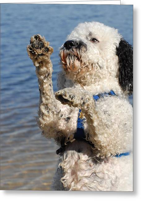 Litter Mates Greeting Cards - Dog 197 Greeting Card by Joyce StJames