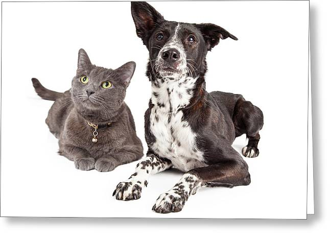 Dog And Cat Laying Looking Up Greeting Card by Susan Schmitz