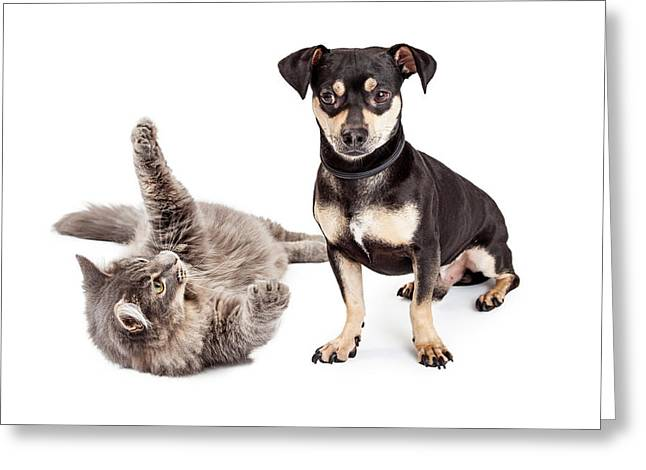 Dog Annoyed With Playful Cat Greeting Card by Susan Schmitz