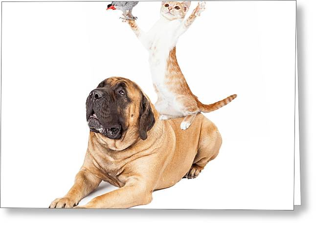 English Mastiff Greeting Cards - Dog Cat and Bird Playing Greeting Card by Susan  Schmitz