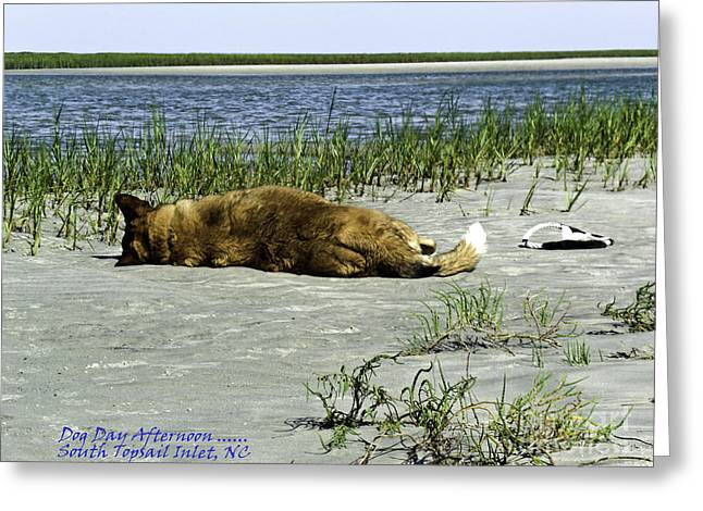 Toy Dog Greeting Cards - Dog Day Afternoon South Topsail Beach NC Greeting Card by Crissy Anderson