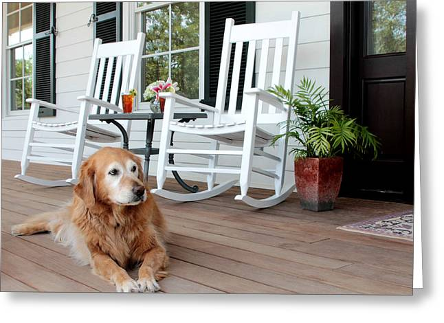 Dog days of summer Greeting Card by Toni Hopper