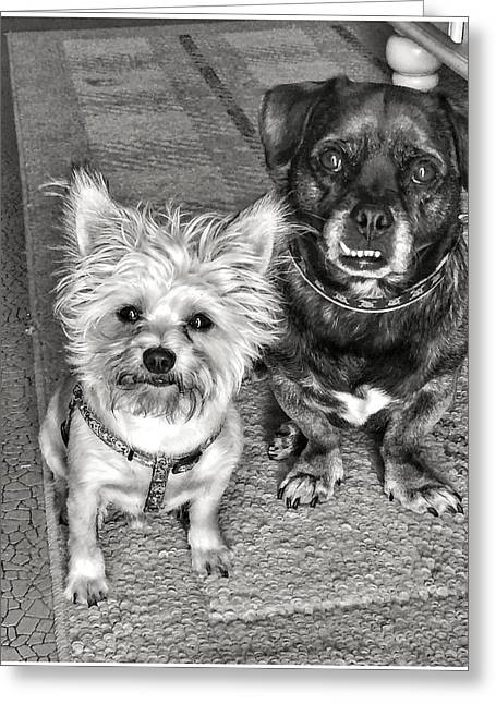 Best Friend Greeting Cards - Dog Face Greeting Card by Braden Moran