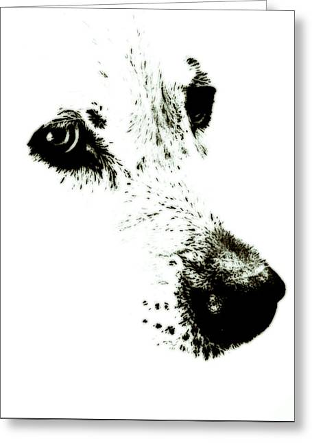 Dog Face Greeting Card by Frank Tschakert
