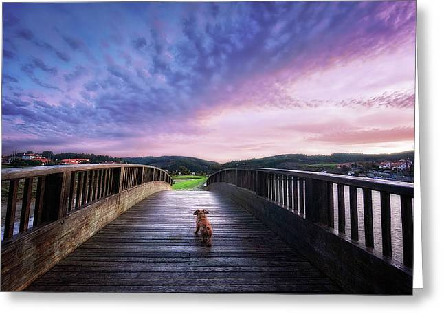 Puppies Photographs Greeting Cards - Dog In A Bridge Greeting Card by Mikel Martinez de Osaba