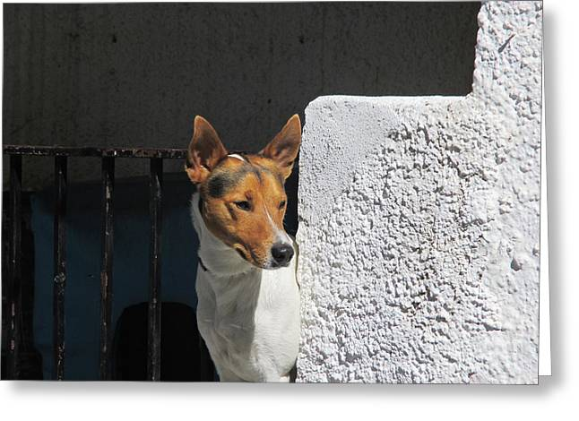 Puppies Photographs Greeting Cards - Dog in Pampaneira Greeting Card by Chani Demuijlder