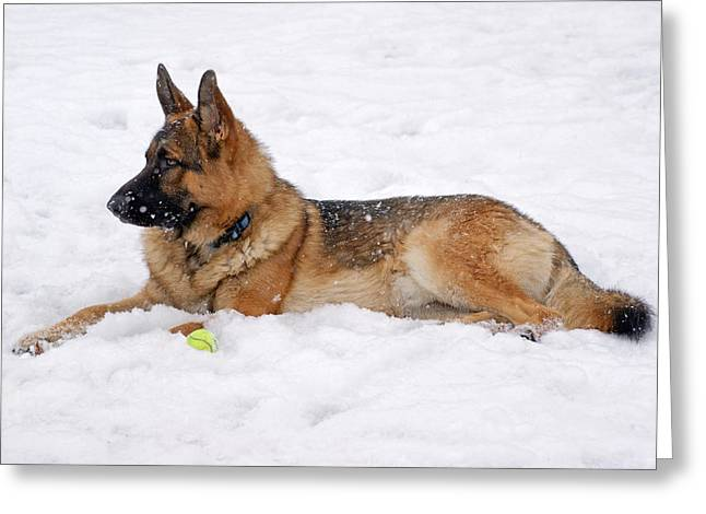 Indiana Art Greeting Cards - Dog in Snow Greeting Card by Sandy Keeton