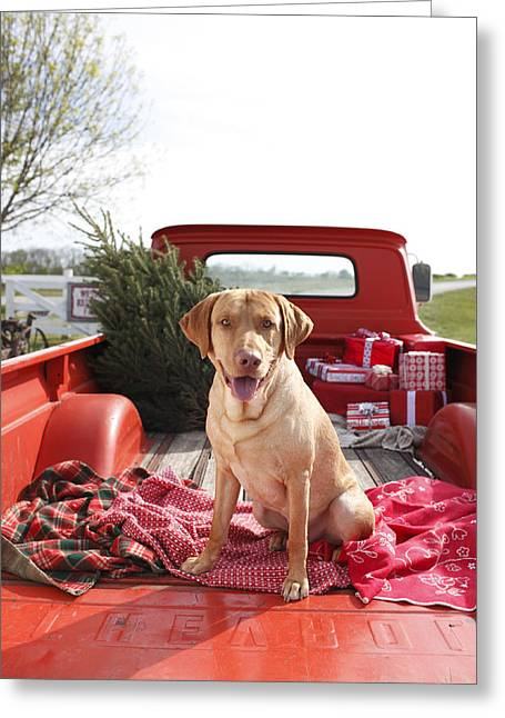 Dog Greeting Cards - Dog In Truck Bed With Pine Tree Outdoors Greeting Card by Gillham Studios