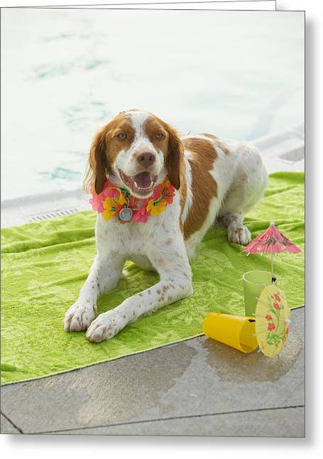 Panting Dog Greeting Cards - Dog Lying On Beach Towel Greeting Card by Gillham Studios