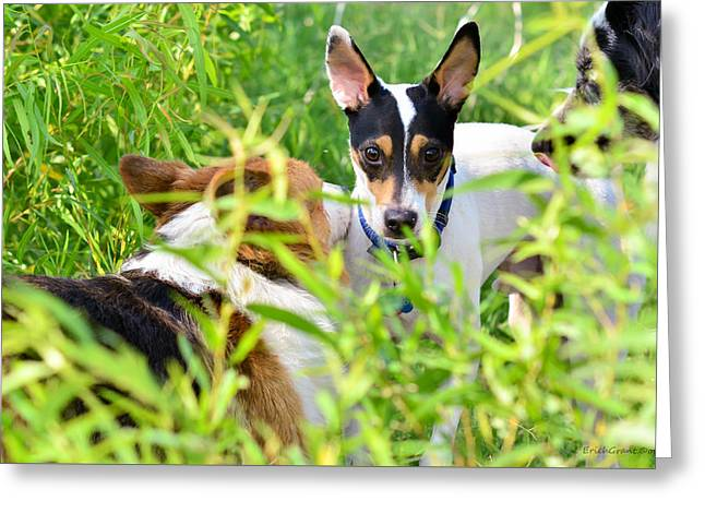 Corgies Greeting Cards - Dog Meet Greeting Card by Erich Grant