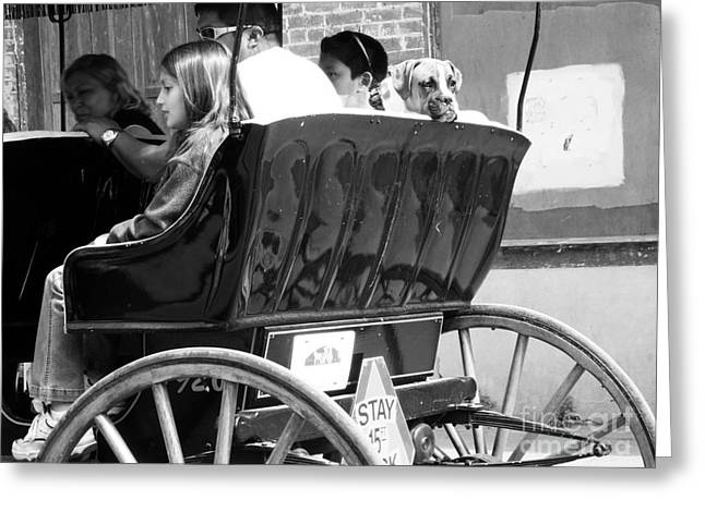 Horse And Buggy Greeting Cards - Dog On A Carriage Ride Greeting Card by Venus