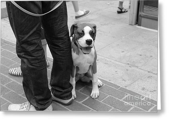 Boxer Digital Art Greeting Cards - Dog On A Leash Greeting Card by Venus