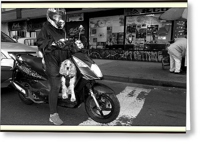 Husky Greeting Cards - Dog on a motorcycle Greeting Card by Daniel Gomez