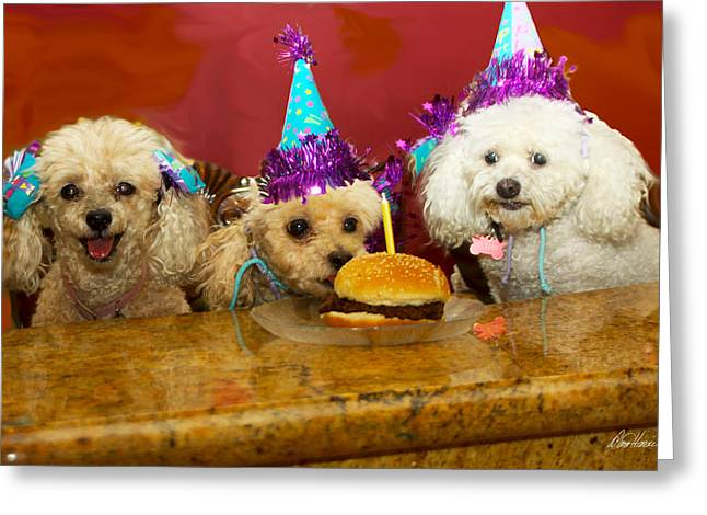 Diana Haronis Greeting Cards - Dog Party Greeting Card by Diana Haronis