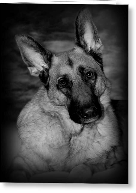 Head Tilt Greeting Cards - Dog Portrait Greeting Card by Angie Tirado
