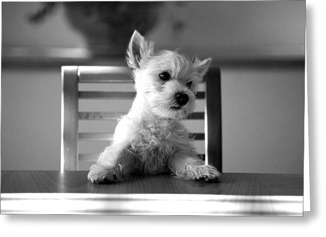 Dog Photographs Greeting Cards - Dog sitting on the table Greeting Card by Sumit Mehndiratta