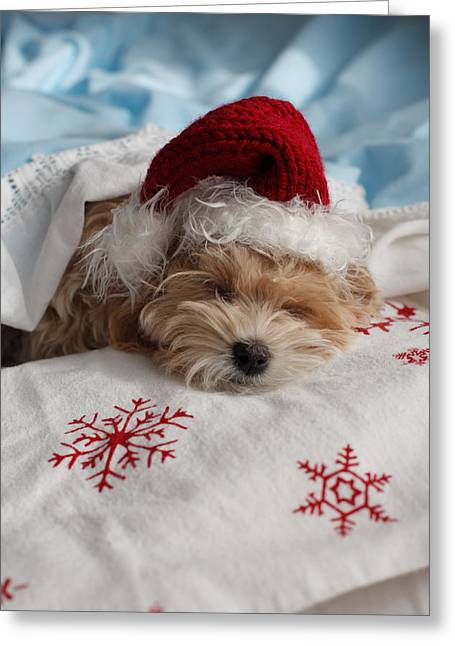 Eye Gestures Greeting Cards - Dog Sleeping In Bed With Santa Hat Greeting Card by Ink and Main