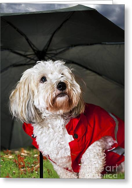 Doggie Greeting Cards - Dog under umbrella Greeting Card by Elena Elisseeva
