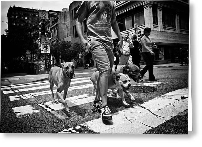 Puppies Photographs Greeting Cards - Dog Walker Greeting Card by David Oakill