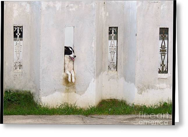 White Tapestries - Textiles Greeting Cards - Dog Watching Greeting Card by James Hennis
