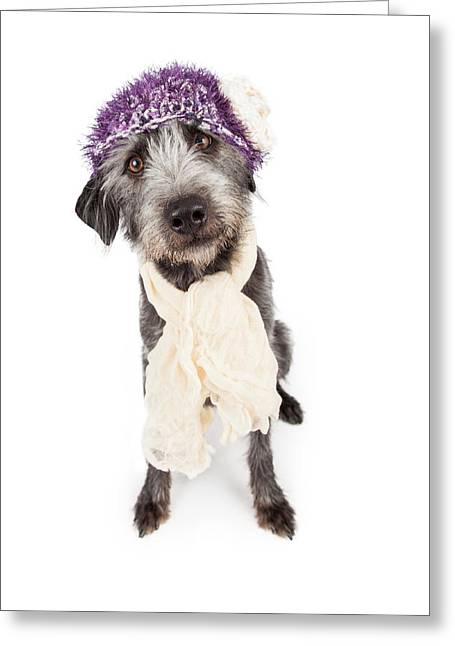 Dog Wearing Winter Hat And Scarf Greeting Card by Susan  Schmitz