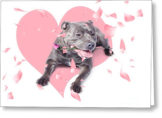 Staffie Greeting Cards - Dog with pink rose on heart shape background Greeting Card by Ryan Jorgensen