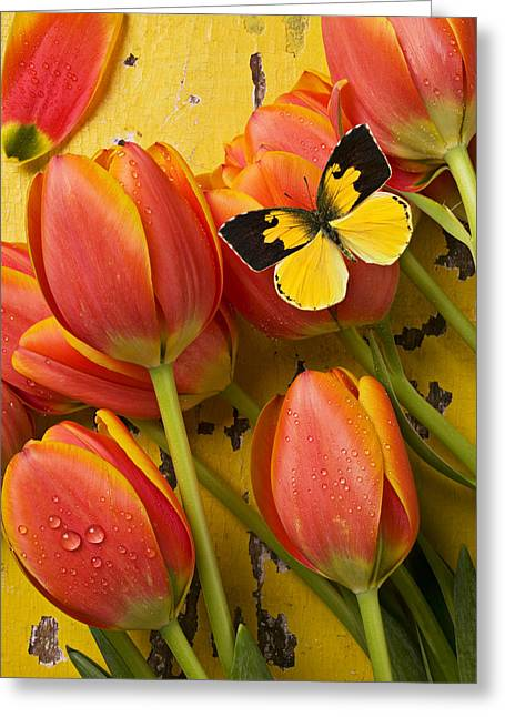 Beautiful Greeting Cards - Dogface butterfly and tulips Greeting Card by Garry Gay