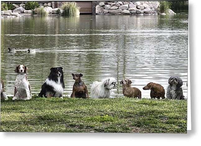 Owner Greeting Cards - Doggie Lineup Greeting Card by David Kehrli