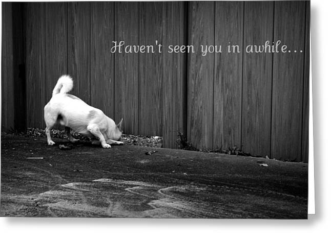 Missing Greeting Cards - Doggy Detective Greeting card Greeting Card by Mandy Shupp