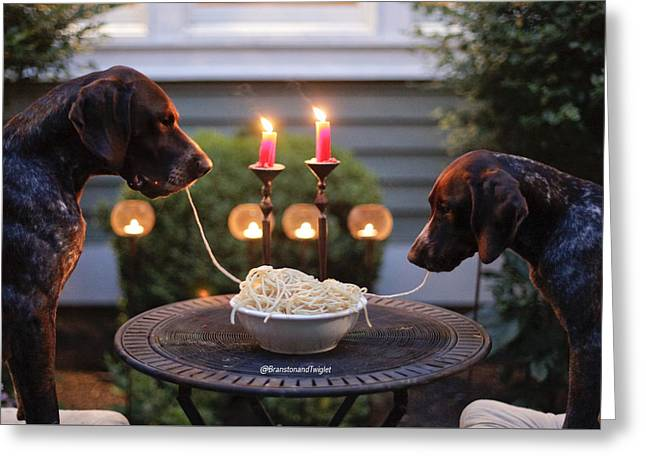 Dogs Dinner Greeting Card by Kimberly Petts