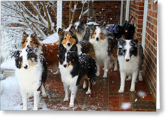 Snowstorm Greeting Cards - Dogs During Snowmageddon Greeting Card by Kathryn Meyer