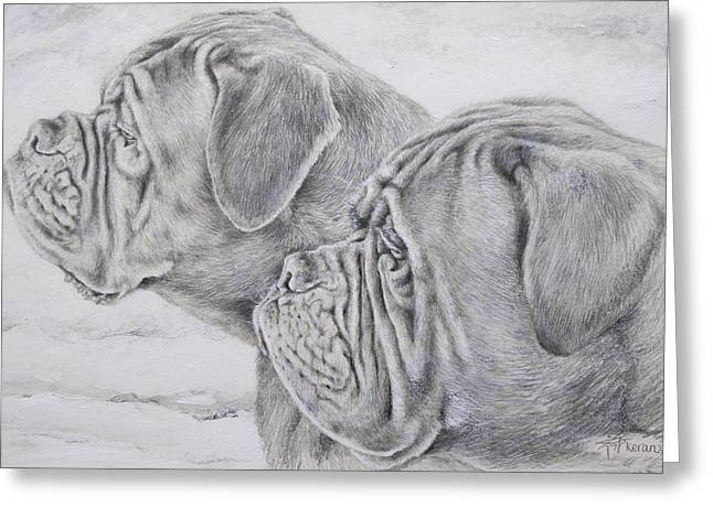 Dog Pencil Greeting Cards - Dogue de Bordeaux Greeting Card by Keran Sunaski Gilmore